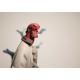 Nouvelle Statue Hellboy par Fariboles